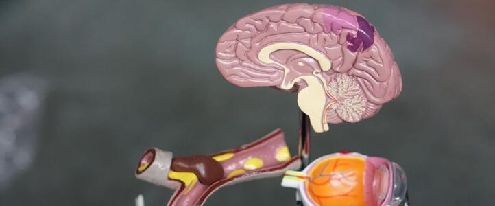 Understanding our brain
